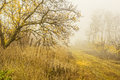 Foggy Day In Autumn Forest Royalty Free Stock Photography - 80100047