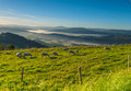 Sheeps Pasturing On A Meadow In Mountains Royalty Free Stock Photos - 80100138