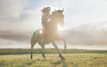Portrait Of An Attractive Woman On A Majestic Horse Royalty Free Stock Photos - 80166258