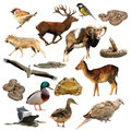 Wildlife Collection Over White Stock Image - 80186001