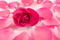 Pink Rose On Rose Petals And Bath Salt Stock Photos - 80214983
