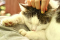 Close Up Outdoor Photo Of The Cat On Lap Stroke Stock Photo - 80219910