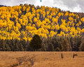 Road To Fall Aspens Stock Photography - 80231162