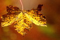 Autumn Rusty Leave Close-up Royalty Free Stock Photos - 80286728