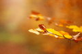 Autumn Rusty Isolated Leave Close-up Royalty Free Stock Image - 80286736