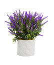 Lavender In Vase Stock Images - 80288814