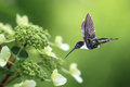 Hummingbird In The Garden Stock Photography - 80312892