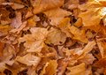 Dead Leaves In The Fall. Royalty Free Stock Photos - 80321348