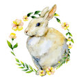 Watercolor Rabbit With Yellow Flower And Herbs Wreath. Royalty Free Stock Photography - 80379237