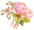 FLower Bouquet. Hydrangea And Rose Bush In Blossom. Watercolor I Stock Photo - 80392960