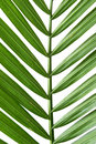 Palm Frond Stock Photos - 8040773
