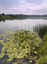 Lilly Pads On A Lake Royalty Free Stock Photography - 8047407