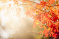 Autumn Thanksgiving Leaves Background Royalty Free Stock Photo - 80419295