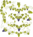 Vector Design Elements In Vintage Style With Vines. Stock Images - 80430014
