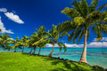 Tropical Beach On North Side Of Samoa Island With Palm Trees Royalty Free Stock Image - 80431606