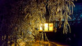 The Frosty Night. Royalty Free Stock Photo - 80455135