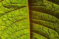 Contrast Leaf Royalty Free Stock Photography - 8051757