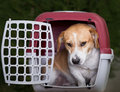Dog In Plastic Carrier Royalty Free Stock Photos - 80555348