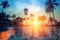 Palm Trees Reflection In The Water On A Tropical Seaside During Sunset. Nature. Royalty Free Stock Photography - 80583847