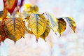 Colorful Yellow Red Autumn Fall Leaves On Tree Branches, Fall Season Stock Photo - 80631220