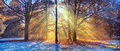 Morning Sunrays In Winter Forest Royalty Free Stock Image - 80638116