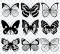 Butterfly Silhouettes Vector Macro Collection Stock Photography - 80657982