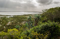 Isimangaliso Wetland Park, Vegeattion. Garden Route South Africa. Stock Images - 80713944