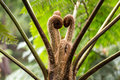 Leaf Sprouts Of An Australian Tree Fern Stock Photos - 80747343