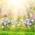 Floral Meadow And Butterfly Royalty Free Stock Images - 80774109