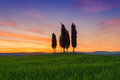Cypress Trees Typical Tuscany Landscape Springtime At Sunrise Royalty Free Stock Photography - 80796777