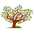 Vector Illustration Of Stylized Branchy Tree Isolated On White B Stock Photos - 80798453