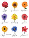 Set Of Flowers Royalty Free Stock Photo - 80802645