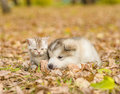 Sad Puppy Lying With Cute Kitten In Autumn Park Royalty Free Stock Photo - 80880685