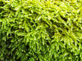 Moss In The Brick Royalty Free Stock Photo - 80958095