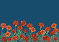 Panoramic View Of Tagetes Patula, The French Marigold. Stock Images - 80982054