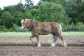 Farm Horse At Work Stock Images - 815244