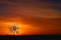 Singe Tree At Sunset Royalty Free Stock Images - 81036989