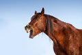 Funny Horse Portrait Royalty Free Stock Photography - 81037217