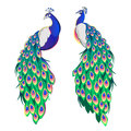 Set Of Two Peacocks  On White Background. Stock Photo - 81047000