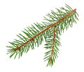 Christmas Tree Branch Isolated On White  With Clipping Path Stock Images - 81146964