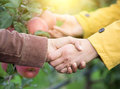 Two Men Shaking Hands In Orchard Royalty Free Stock Image - 81188496