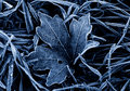 Frosted Leaf Stock Photos - 8122423