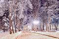 Winter Colorful Landscape - Winter Alley In The Park With Winter Frosty Trees And Bright Lanterns Stock Photography - 81204632