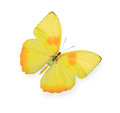 Yellow Butterfly Isolated Royalty Free Stock Photography - 81204747