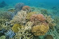 Colorful Corals Underwater Pacific Ocean Royalty Free Stock Photo - 81223145