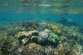 Shallow Reef With Corals Underwater Pacific Ocean Stock Photos - 81242233