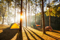 Sun Rise At Pang-ung, Pine Forest In Thailand Stock Images - 81259314