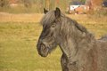 Beautiful Horse On A Field Stock Photos - 81276623