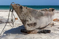 Old Boat. Royalty Free Stock Photos - 81292788