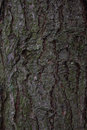 Pine Tree Bark Texture Stock Photography - 81298302